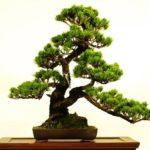 日本文化のたった1つの特徴が消滅したら日本文化は終わり
