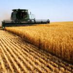 遺伝子を改悪された種子が世界を制覇して多国籍企業が嗤う