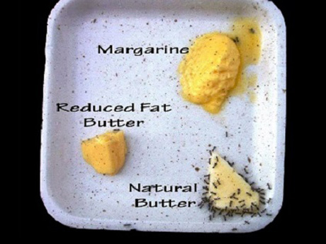 トランス脂肪酸の問題は、実は貧困問題でもある理由とは?
