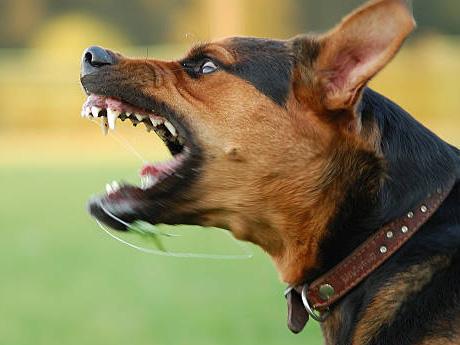 「怒り」という感情を教育で奪われ、牙を抜かれた若者たち